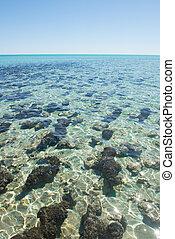 Stromatolites Hamelin Pool Australia