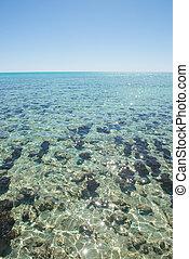 Stromatolites Hamelin Pool Western Australia
