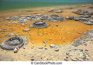 Stromatolites Lake Thetis