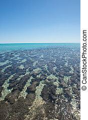 Stromatolites Shark Bay Australia