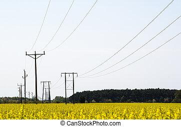 stromleitungen, in, a, rapeseed, feld