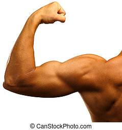 strong biceps on a white background