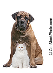 strong dog and a show cat - a white cat and a big dog in...