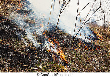Strong fire in the forest. A lot of smoke on the background of the trees. Ashes, and fire on dry grass, close-up. Large black burned area on the river bank.