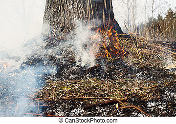 Strong fire in the forest on the lake. A lot of smoke on the background of the trees. Ashes, and fire on dry grass, close-up. Large black burned area on the river bank.