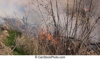 Strong forest fire with black smoke