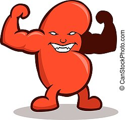 Strong Kidney - Vector illustration of strong kidney