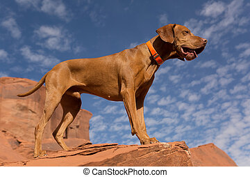 strong male dog