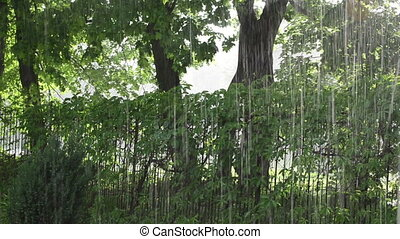 strong rain tree park