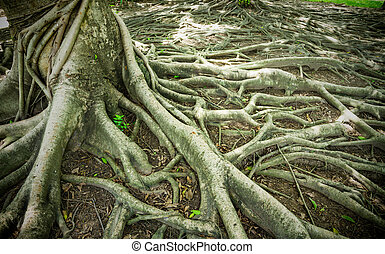 Strong Root Background  - Strong Root Background