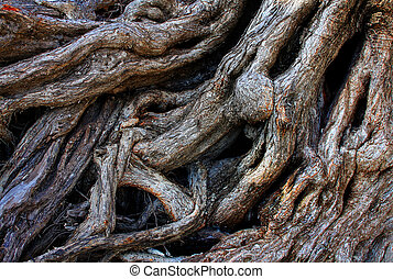 Strong roots of an old tree background