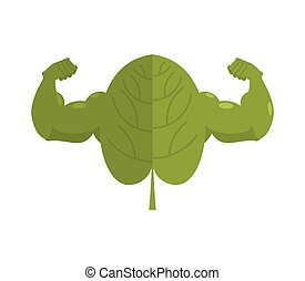 Strong spinach. Powerful herbs for muscle growth....