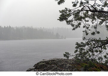 summer rain on a forest lake