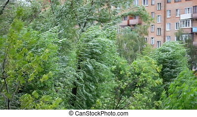 strong wind swings trees against the multi-storey building