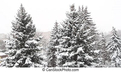 Strong wind with snow and Christmas trees