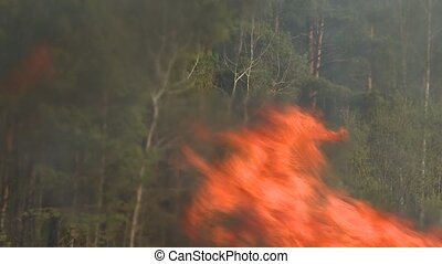 Strongly burning forest. Natural disaster. Forest on fire.