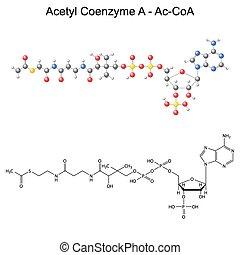 Acetyl Coenzyme-A - Ac-CoA