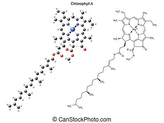 Structural chemical formula and model of chlorophyll A, 2d...
