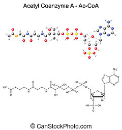 Structural chemical formula and model of Acetyl Coenzyme-A -...