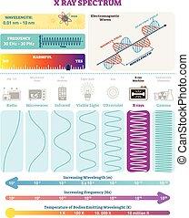 structure., harmfulness, spectrum., eletromagnético, waves:, ilustração, onda, diagrama, frequência, vetorial, raio x, comprimento onda