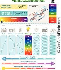 structure., harmfulness, spectrum., eletromagnético, waves:, ilustração, onda, diagrama, visível, vetorial, frequência, comprimento onda