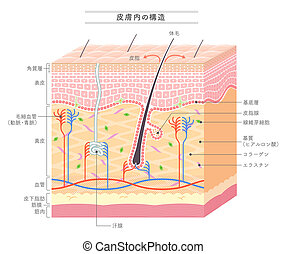 Structure in the skin Japanese notation