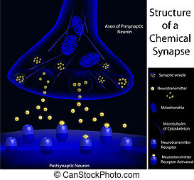 Structure of a synapse - Scientifically accurate structure...