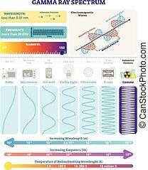 structure., raios, radioativo, harmfulness, spectrum., eletromagnético, waves:, ilustração, onda, diagrama, frequência, vetorial, gamma, comprimento onda