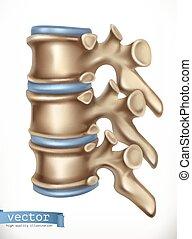 structure., skelett, rygg, vektor, mänsklig, medicine., 3, ikon