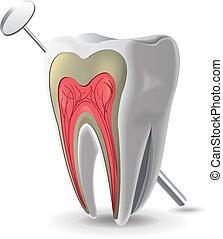 structuur, van, tand