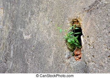 Struggle for survival in a crevice