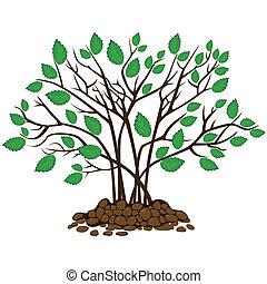 struik, met, bladeren, in, de, terrein