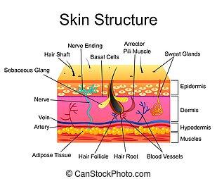 struktur, hintergrund, freigestellt, abbildung, vektor, menschliche haut