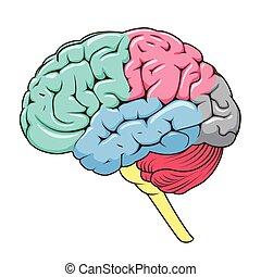 struktur, hjärna, vektor, schematisk, mänsklig