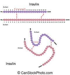 struktur, von, menschliche , insulin, eps8