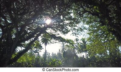 strzał, dżungla, las