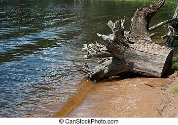 Stub on the bank of the lake