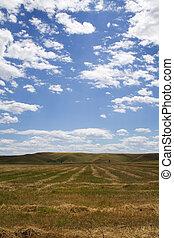 stubble, campo, nublado, summerday