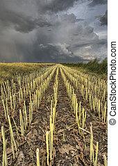 stubble, campo, tempestade, prarie