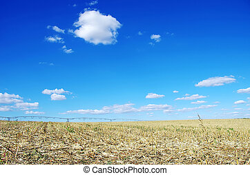 stubble, cornfield, portugal