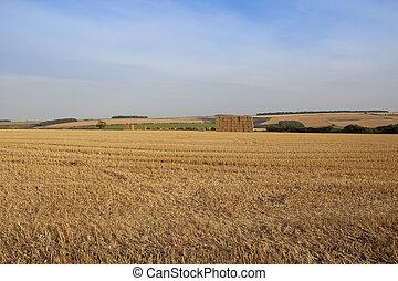 stubble field background