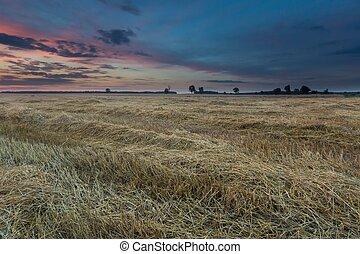 Stubble field landscape