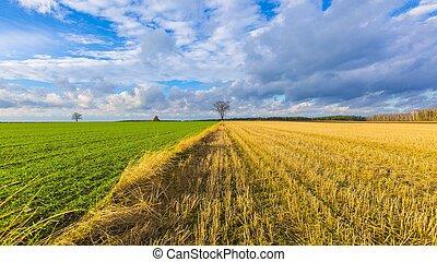 Stubble field landscape under cloudy sky. Beautiful polish...