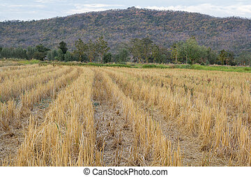 stubble field on a background of mountains
