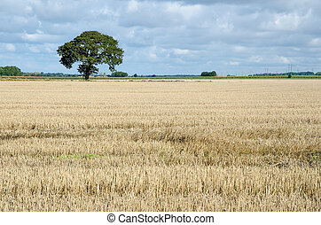 Stubble field with a lone tree