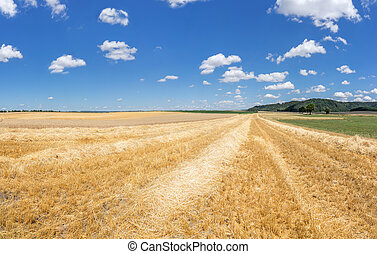 Stubble field with rows of straw