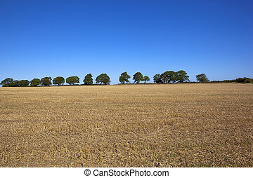 stubble field with trees
