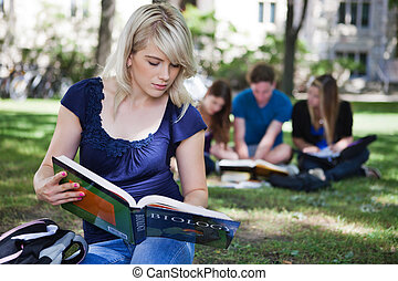 Students studying in campus