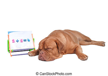 studieren, hund, mathe