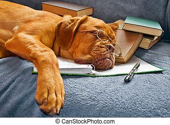 studieren, nach, hund, eingeschlafen